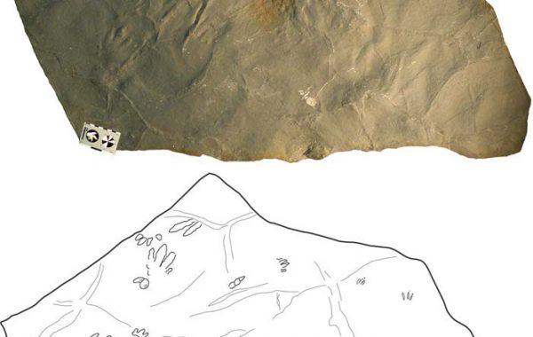 Chirotherium ibericus